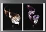 O.J PERRIN : Publicité de bijoux