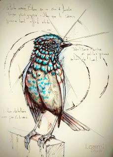 LittleBlueBird
